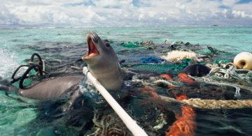 Isla de desechos fue encontrada en el océano pacífico