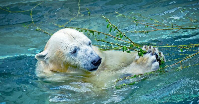 7 animales tiernos en peligro de extinción