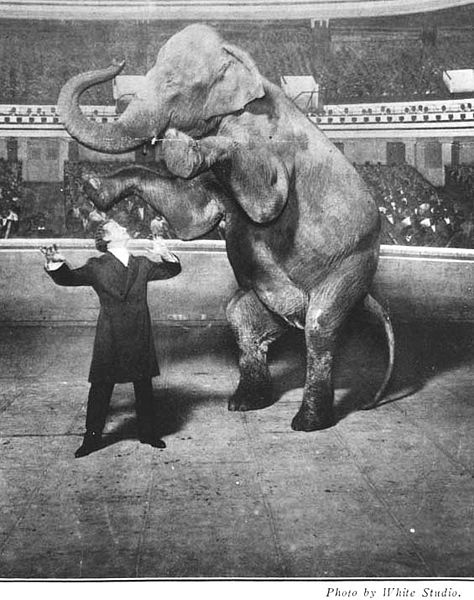 El-elefante-mágico-houdini