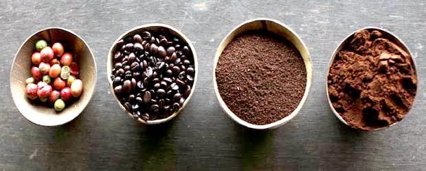 Curiosidades del Café que nunca te contaron