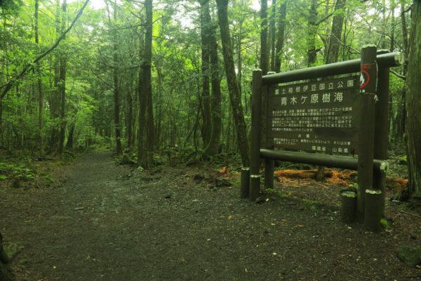 aokigahara el bosque maldito de japón