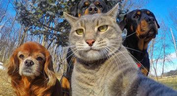 Los 7 Selfies más divertidos con animales