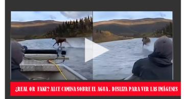 VIDEO VIRAL: ALCE CORRE POR LAS AGUAS DE UN RÍO EN ALASKA