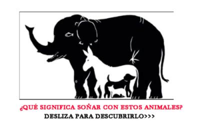 QUE SIGNIFICA SOÑAR CON ANIMALES: ENTRA AQUÍ Y AVERÍGUALO